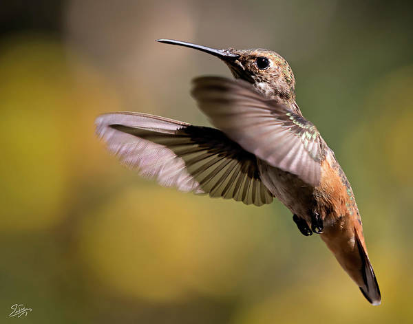 Photograph - Hummer 4 by Endre Balogh