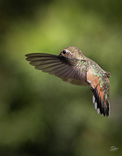 Photograph - Hummer 8 by Endre Balogh