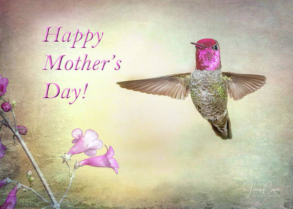 Photograph - Hummer-happy Mother's Day by James Capo