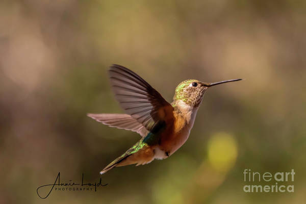 Wall Art - Photograph - Humming Bird In Brown by Ann Loyd