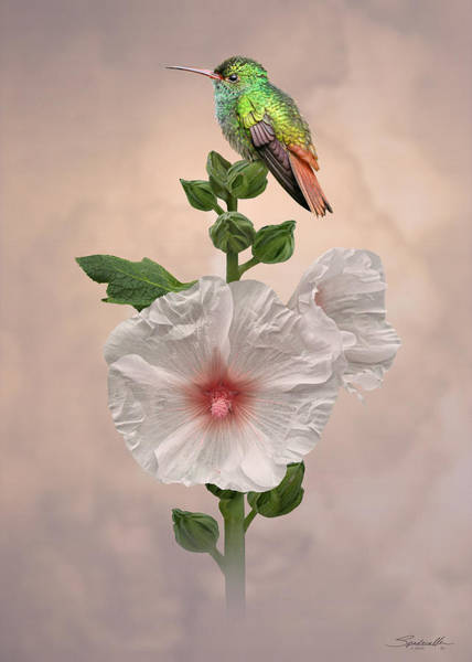 Wall Art - Digital Art - Hummingbird And Hollyhock by M Spadecaller