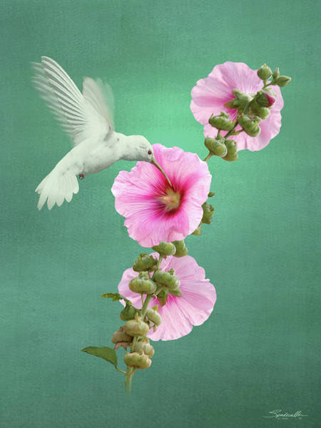 Wall Art - Digital Art - Hummingbird And Malva Wildflower by M Spadecaller