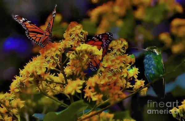 Photograph - Hummingbird And Monarch by John Kolenberg