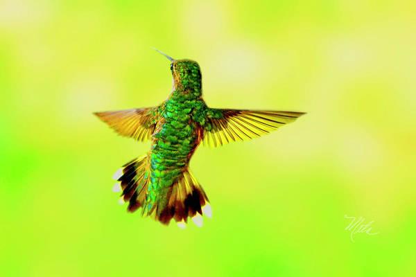 Photograph - Hummingbird Back by Meta Gatschenberger