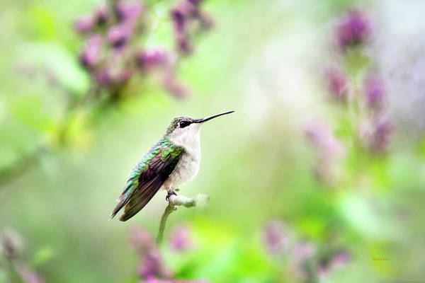 Beautiful Hummingbird Photograph - Hummingbird Charm by Christina Rollo