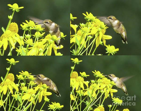 Photograph - Hummingbird Composition 77 by Lizi Beard-Ward