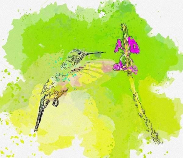 Wall Art - Painting - Hummingbird, Costa Rica 2   Watercolor By Ahmet Asar by Celestial Images