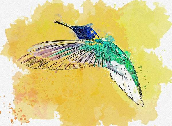 Wall Art - Painting - Hummingbird, Costa Rica    Watercolor By Ahmet Asar by Celestial Images