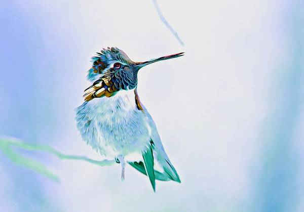Photograph - Hummingbird Dream 2 by Fraida Gutovich