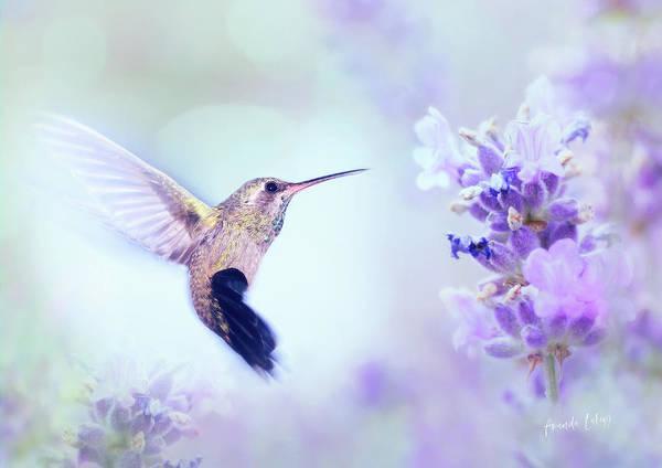 Nectar Mixed Media - Hummingbird Dreams by Amanda Lakey