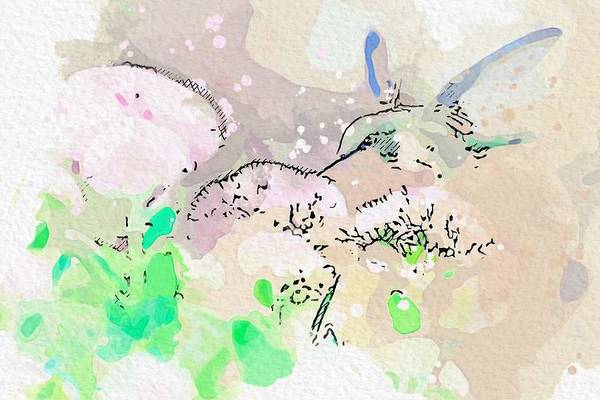 Wall Art - Painting - Hummingbird Feeding    Watercolor By Ahmet Asar by Celestial Images