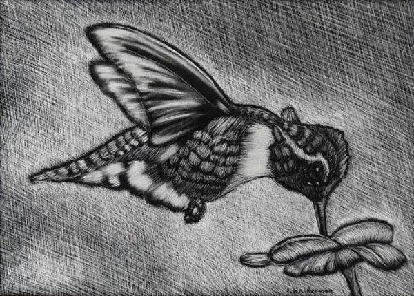 Wall Art - Drawing - Hummingbird by ILona Halderman