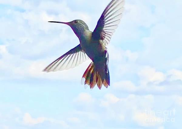 Wall Art - Photograph - Hummingbird In Flight  by Lisa Quenon