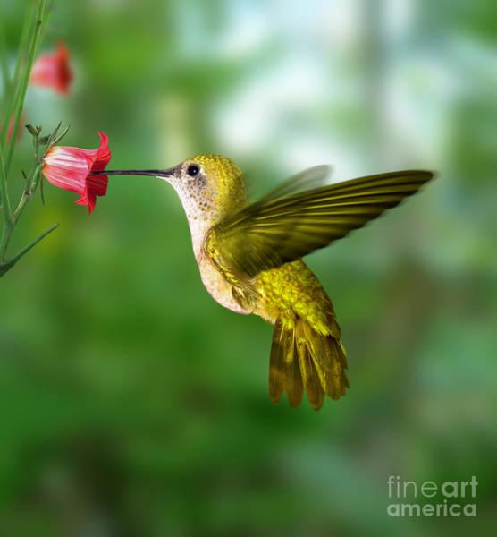 Beak Wall Art - Photograph - Hummingbird by Ktsdesign