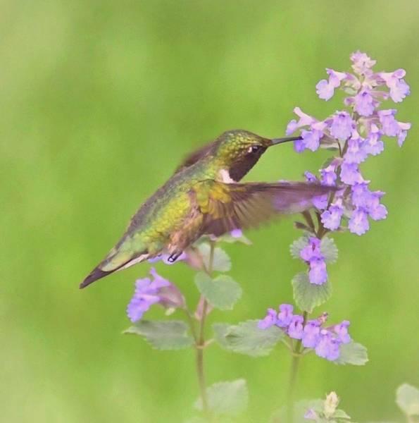 Wall Art - Photograph - Hummingbird Love by Peg Donnellan