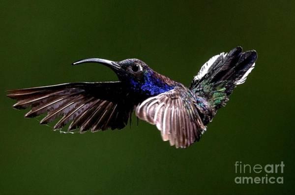 Digital Art - Hummingbird  by Michael Graham