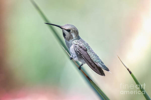 Wall Art - Photograph - Hummingbird On A Frond by Lisa Manifold