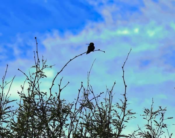 Photograph - Hummingbird Silhouette On Palo Verde Tree by Judy Kennedy