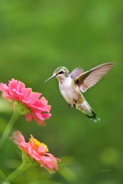 Photograph - Hummingbird Sunrise by Christina Rollo