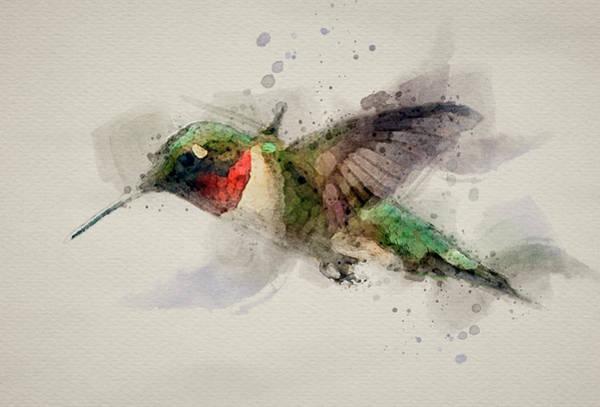 Wall Art - Photograph - Hummingbird Watercolor by Paul Freidlund