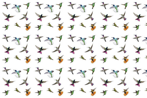 Digital Art - Hummingbirds Of Trinidad And Tobago On White by Rachel Lee Young