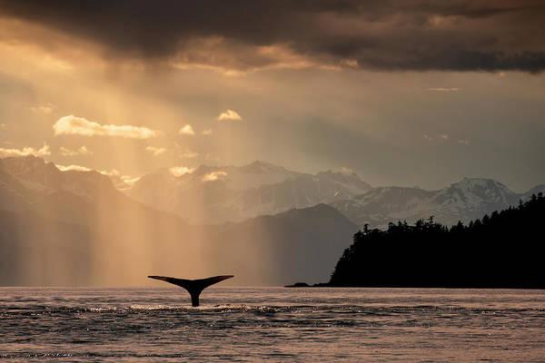 Wall Art - Photograph - Humpback Whale  Megaptera Novaeangliae by John Hyde