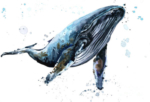 Wall Art - Digital Art - Humpback Whale Watercolor Illustration by Faenkova Elena