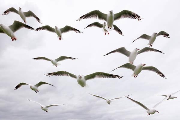 Wall Art - Photograph - Hungry Seagulls Xxxl by 4fr