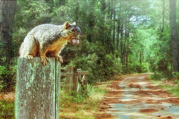 Photograph - Hungry Squirrel by Bonnie Willis