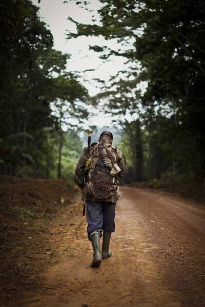 Photograph - Hunting For Bushmeat In Cameroon by Brent Stirton