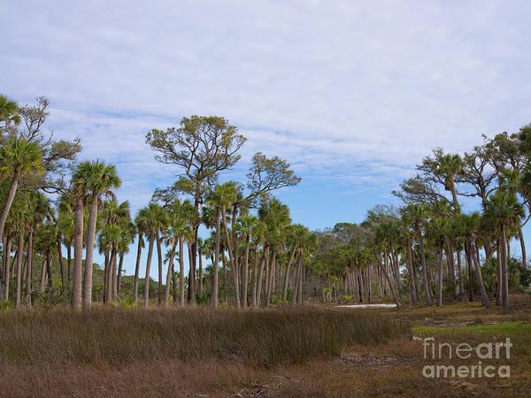 Photograph - Hunting Island Marsh by Patrick M Lynch