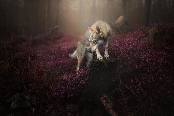 Czechoslovakian Photograph - Huntress  by Alicja Zmyslowska