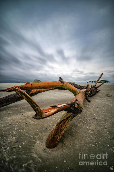 Photograph - Hurricane Florence Beach Log - Portrait by David Smith