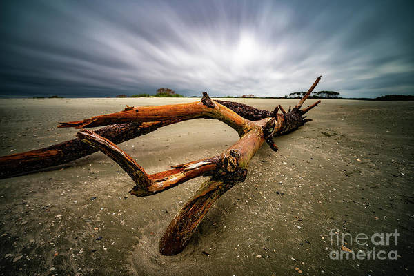 Photograph - Hurricane Florence Morning Beach Log by David Smith