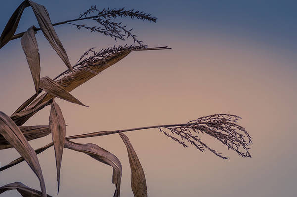 Photograph - Husk To Dawn by Christi Kraft