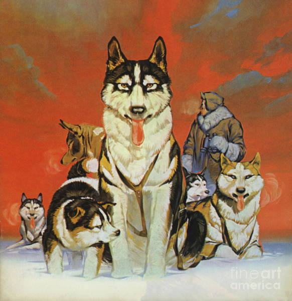 Wall Art - Painting - Huskies by Angus McBride