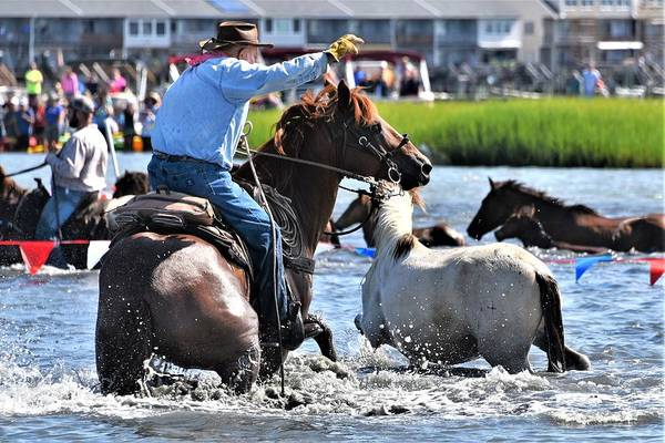 Photograph - Hustling A Stray Wild Horse - Chincoteague Pony Run by Kim Bemis