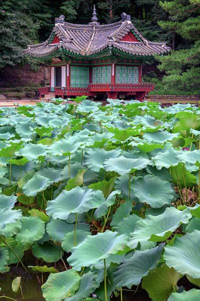 Photograph - Huwon Secret Garden by Rick Berk