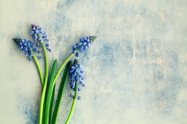 Fragility Photograph - Hyacinth by Jim Franco