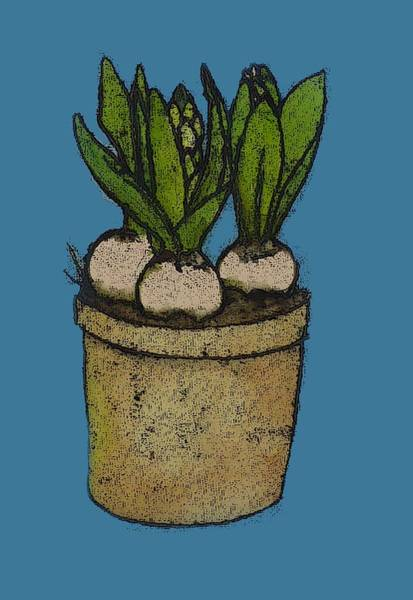 Engels Painting - Hyacinths In A Pot by Sarah Thompson-engels