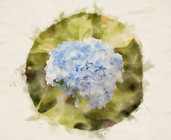 Painting - Hydrangea Watercolor by Dan Sproul