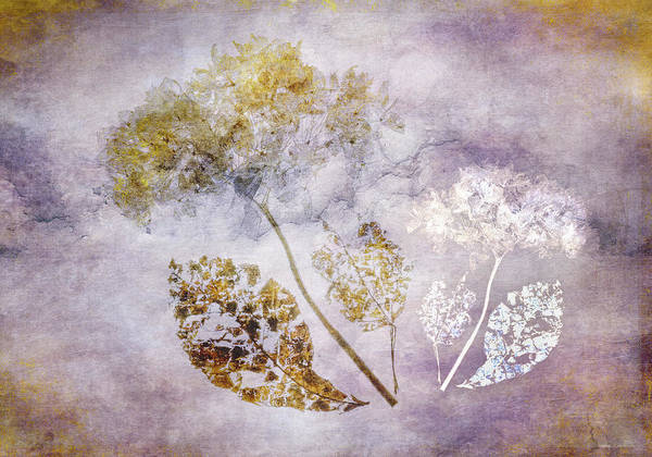 Digital Art - Hydrangea With White by Glenys Garnett