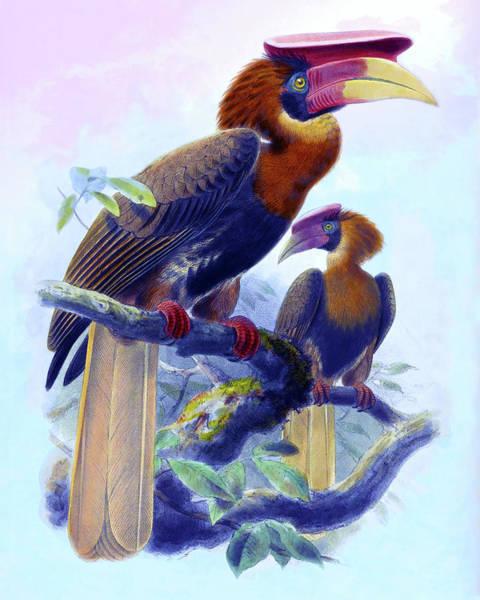 Hornbill Drawing - Hydrocorax Mindanensis, Hornbill Bird by John Gerrard Keulemans