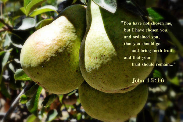 Bible Quotes Photograph - I Have Chosen You by Glenn McCarthy Art and Photography