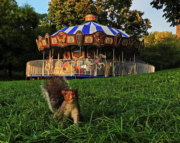 Photograph - I See You Boston Common Carousel Boston Ma Squirrel by Toby McGuire