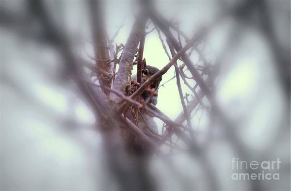 Photograph - I See You by Patti Whitten
