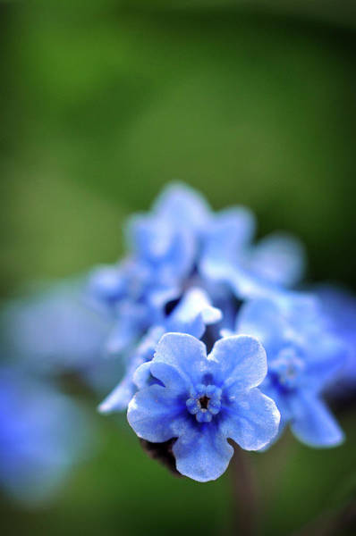 Photograph - I Spy Something Blue by Michelle Wermuth