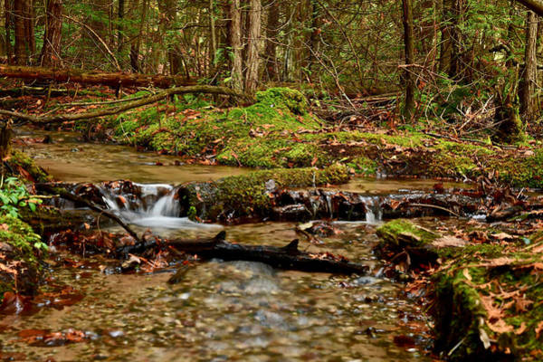 Manistee National Forest Wall Art - Photograph - Iargo Springs 9259 by Michael Peychich