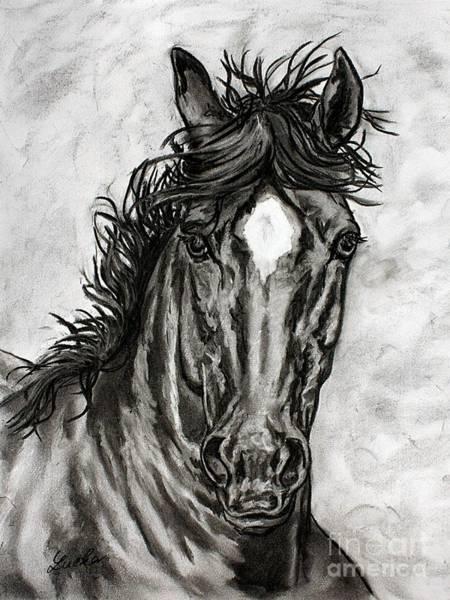 Friesian Drawing - Iberian Horse Drawing by Lucka SR