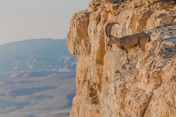 Wall Art - Photograph - Ibex Buck Overlooking Ramon Crater by Morris Finkelstein